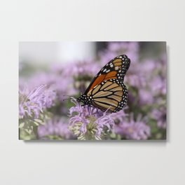 Monarch and Bee Balm Metal Print