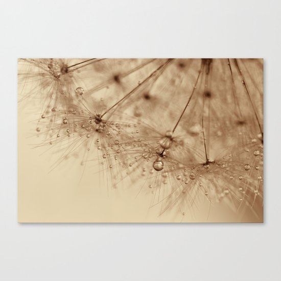 droplets of gold - dandelion Canvas Print