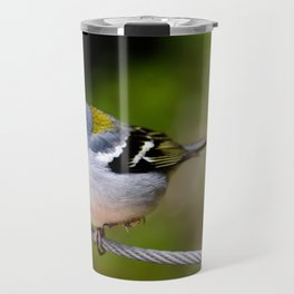 Beautiful Madeiran chaffinch bird standing one one leg at wire. Travel Mug