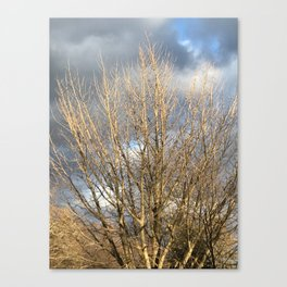 Tree in storm Canvas Print