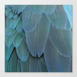 Abstract feathers in blue Canvas Print