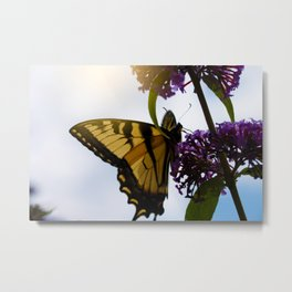 Butterfly and Sunlight Metal Print