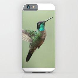 Male Magnificent Hummingbird in flight, in the Costa Rican rain iPhone Case