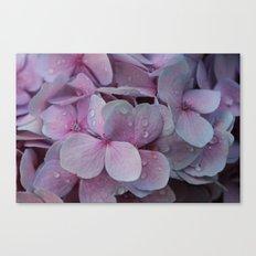 Rainy Hydrangea Beauty Canvas Print