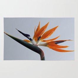 The bird of paradise flower Rug