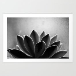 Zen Sprout Art Print