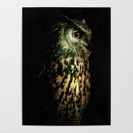 Eagle Owl Portrait Poster