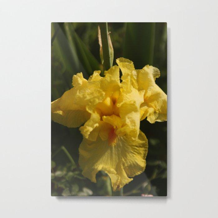 Iris - Yellow Metal Print