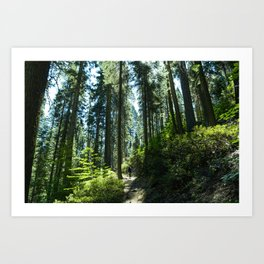 Redwood Greens Art Print