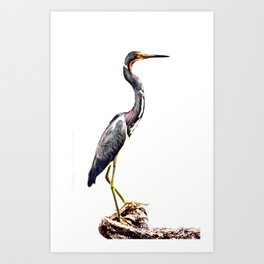 The Gentle Graceful Heron Art Print
