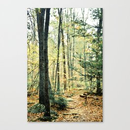 Where We Once Wandered Canvas Print
