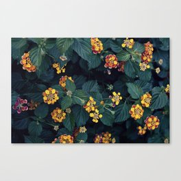 Beautiful flowers over my neighborhood Canvas Print