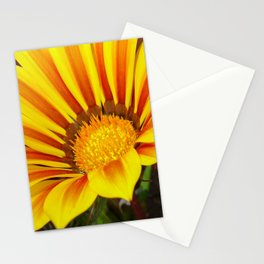 Orange and Rust Color Gazania Montezuma Macro  Stationery Cards