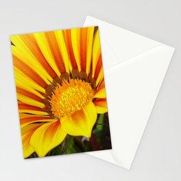 Orange and Rust Color Gazania Montezuma Macro  Stationery Cards