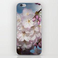 Under A Cherry Tree iPhone Skin