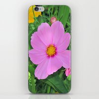 cosmos iPhone & iPod Skins featuring Cosmos by Bella Mahri-PhotoArt By Tina
