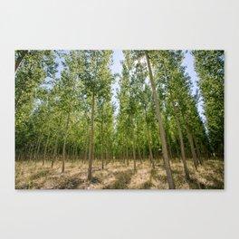 Boardman Oregon Trees Canvas Print