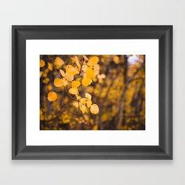 Autumn Leaves - Eastern Sierras Framed Art Print