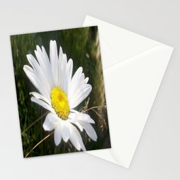 Close Up of a Margarite Daisy Flower Stationery Cards
