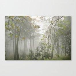 Dream forest. Sierras de Cazorla, Segura y Las Villas Natural Park Canvas Print