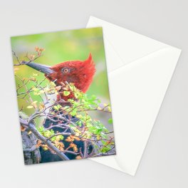 Woodpecker at Forest Pecking Tree, Patagonia, Argentina Stationery Cards