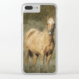Young Palomino Bachelor Stallion Clear iPhone Case