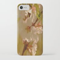 cherry blossoms iPhone & iPod Cases featuring Cherry Blossoms by Dorothy Pinder