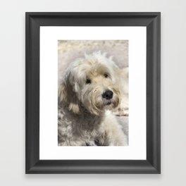 Dog Goldendoodle Framed Art Print