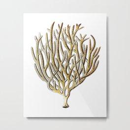 Sea Coral No.1 Antique Natural History Print Metal Print
