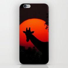 Giraffe Sunset iPhone & iPod Skin