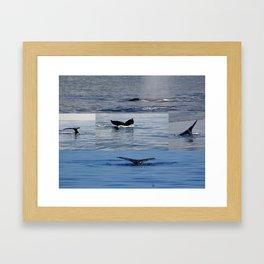 Maui whales tales Framed Art Print
