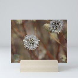 Closeup Of Mature Seed-head Coachella Wildlife Preserve Mini Art Print