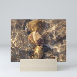 Shells in a Rock Pool at the Beach Mini Art Print