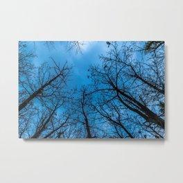 Blue sky over naked trees Metal Print