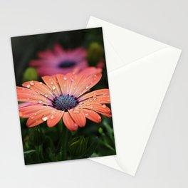 Osteospermum Daisy Peach Stationery Cards