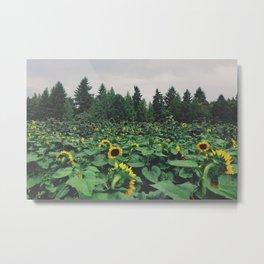 Sunflower Field, Sauvie Island, OR  Metal Print