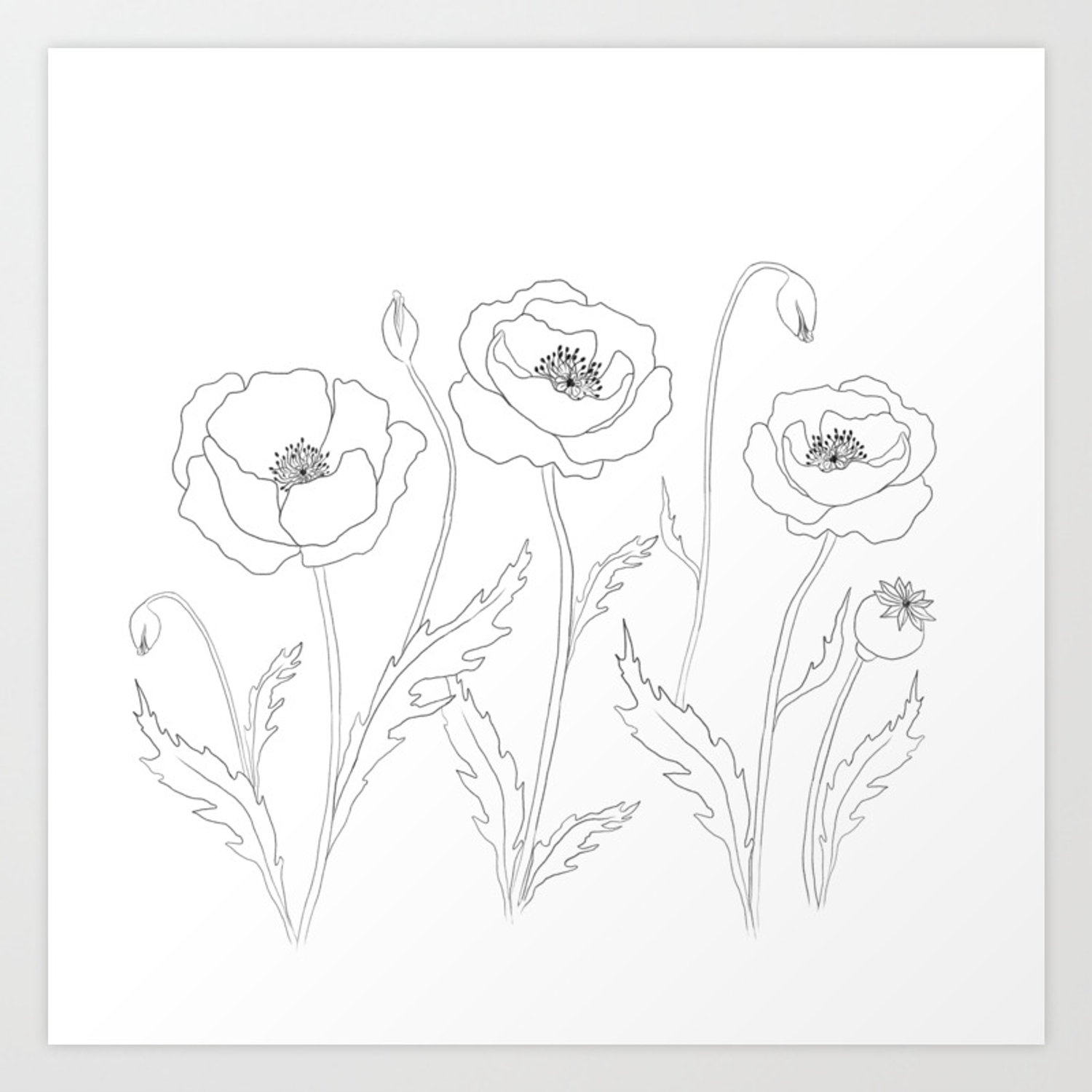 Simple Poppy Flower Floral Design Black And White Art Print By
