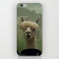 farm iPhone & iPod Skins featuring Alpaca Farm by TaLins