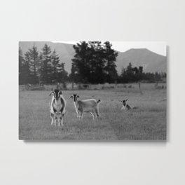 free roam Metal Print
