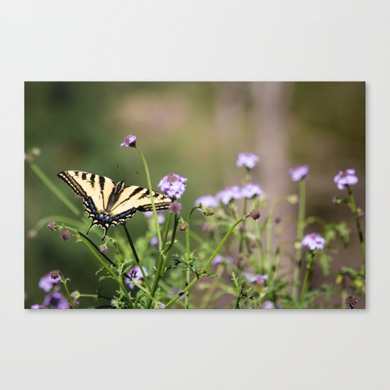 Flutter by, butterfly. Canvas Print