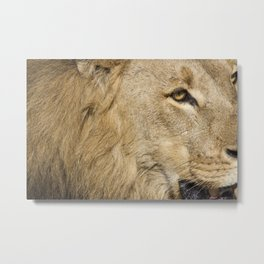 """""""I'm Not Comfortable with This"""" Metal Print"""