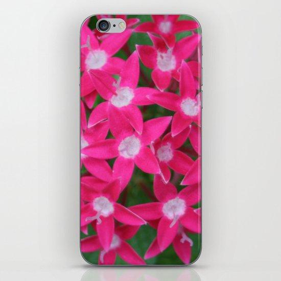 Pink Ixora iPhone & iPod Skin