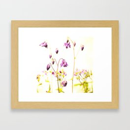 Purple Columbine By The Wall Framed Art Print