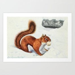 Fuertes, Louis Agassiz (1874-1927) - Burgess Animal Book for Children 1920 (Red Squirrel 2) Art Print