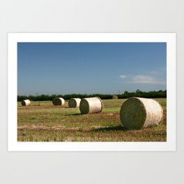 Hay rolls Art Print
