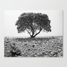 Solitary Tree Springing From Waikoloa Coral - Hawaii - Black and White Canvas Print