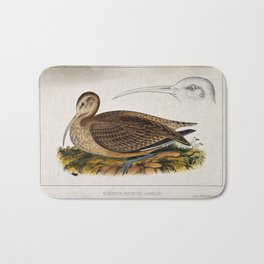 A curlew and separate study of the head and bill. Coloured lithograph by W. E. Hitchcock, ca. 1858. Bath Mat