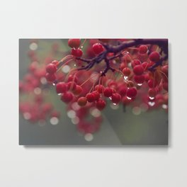 candied Metal Print