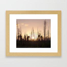 A Forest's End Framed Art Print