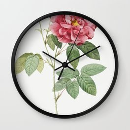 French Rose also known as Ordinary Provins Rosebush (Rosa galluca offuenalis) from Les Roses (1817-1824) by Wall Clock
